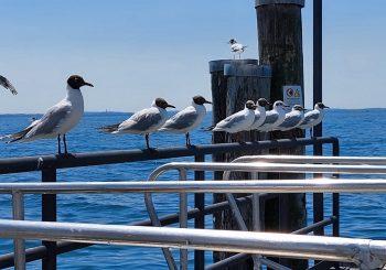 """Daniela, Isola del Garda """"Marina chiama,  all'appello tutti presenti"""""""